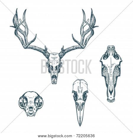 Animal Scull Set Deer Horse Cat Crow