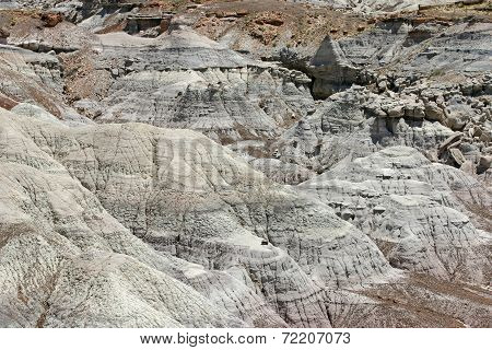 Arid Petrified Forest Of Arizona