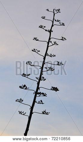 Branch of a Tree - Mount Nebo In Jordan