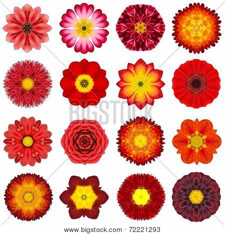 Collection Various Red Concentric Flowers Isolated On White