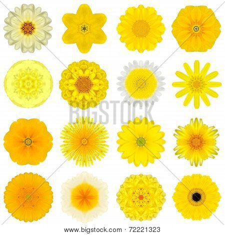 Collection Various Yellow Concentric Flowers Isolated On White