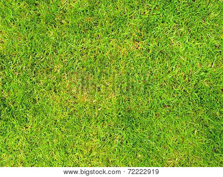 Background Image Of A Lush Grass Field