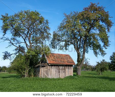 Small wooden shack under fruit trees
