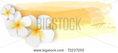 Plumeria On Watercolor Banner