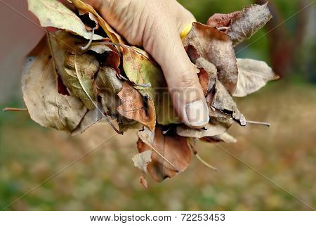 Hand With Foliage