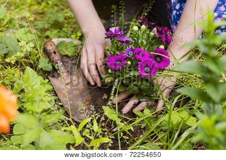 Planting Of Flowers