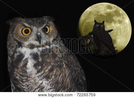 A Great Horned Owl Pair And Moon Against Black