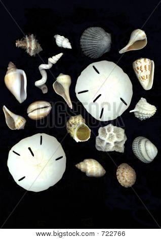 seashells randomly arranged