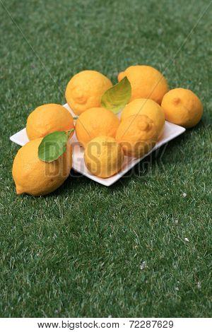 Lemons on Grass Landscape