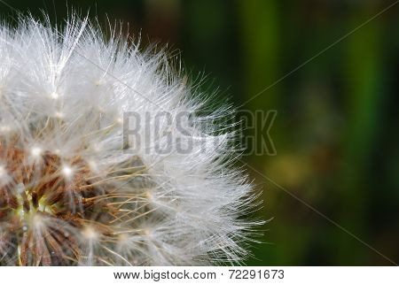 Soft Blowball