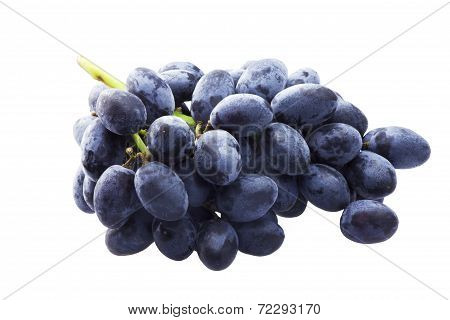 Branch Of Blue Grapes Isolated On The White