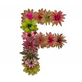 image of piccolo  - bromeliad flower letter isolated on white background - JPG