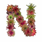 foto of piccolo  - bromeliad flower letter isolated on white background - JPG