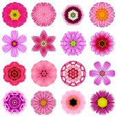Постер, плакат: Collection Various Purple Concentric Flowers Isolated On White