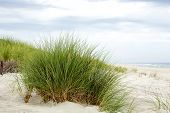 stock photo of dune grass  - Grass on the dunes at the Baltic Sea coast in Jurata in Poland - JPG