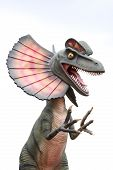 foto of dilophosaurus  - A large scale model of a Dilophosaurus Spitter dinosaur over a white background - JPG