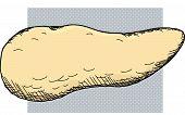 foto of pancreas  - Human pancreas organ cartoon over white background - JPG