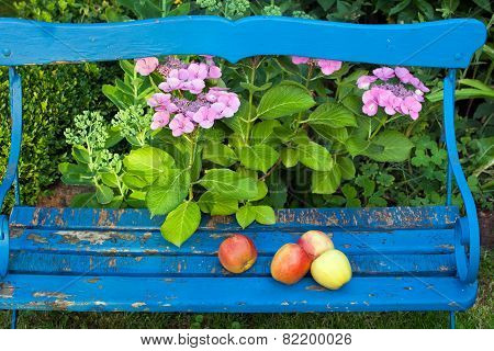 Fresh Apples On Top Of Wooden Bench At The Garden