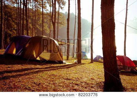 Camping at Pang Tong Under Royal Forest Park