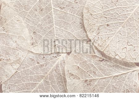 Background textured image made of delicate leaf veins