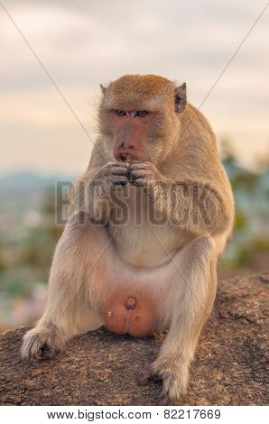 monkey eat fruit on mountain at huahin ,Thailand,