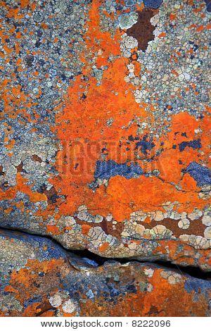 Lichen Abstracts