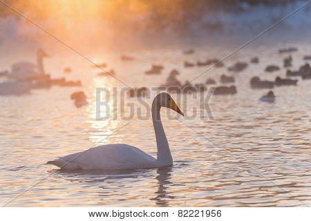 Swan Lake Fog Winter Sunset
