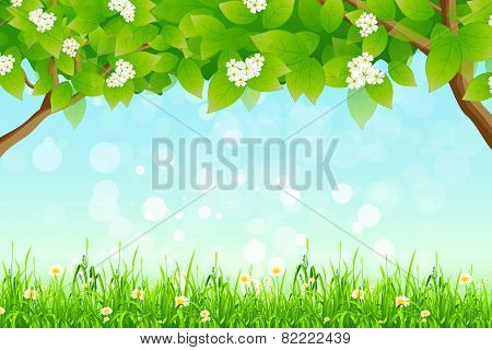 Green Background With Branches Of Trees And Grass