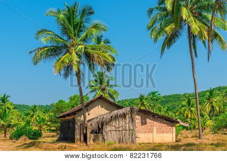 Abandoned Building In A Coconut Grove In The Tropics