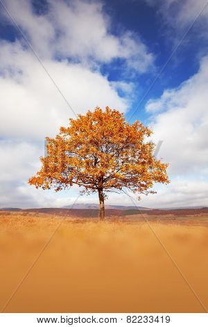 Lonely Beautiful Autumn Tree