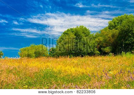 Summer Blooming Meadow