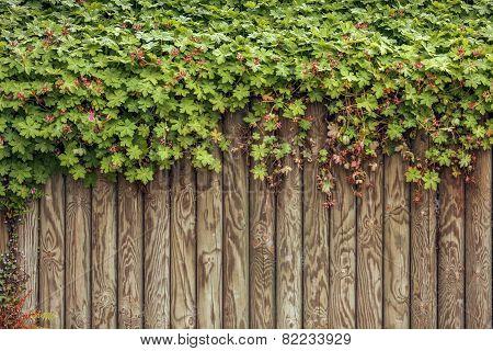 Fresh Green Leaf On Wood Frame Background
