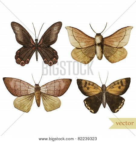 watercolor, butterfly, red, brown, pattern, wallpaper, background, insect