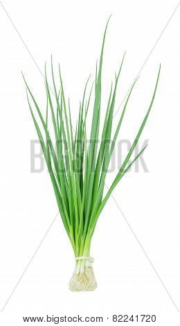 Fresh Scallions Isolated On A White Background