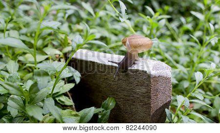 A Slug In The Garden. Schneckenplage In The Garden