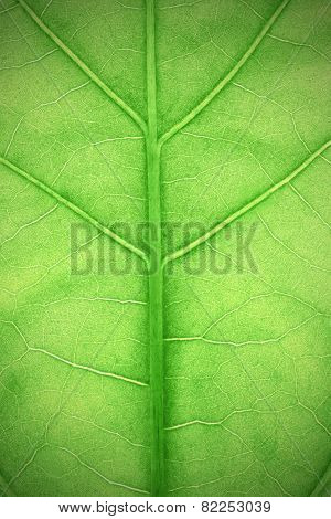 Textured Green Leaf Plants Macro