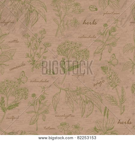 Vector seamless pattern with herbs
