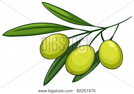 Illustration of a close up olives