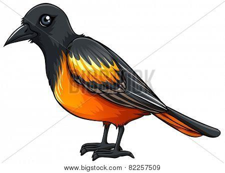Illustration of a closeup beautiful bird