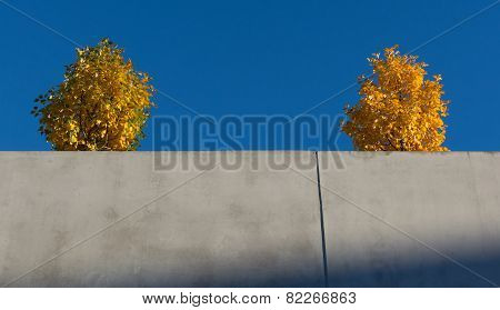 Two Yellow Trees On Concrete Wall.