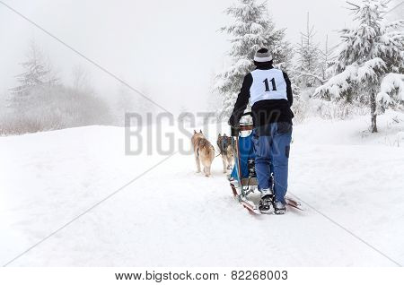 Dog Sled With Huskies
