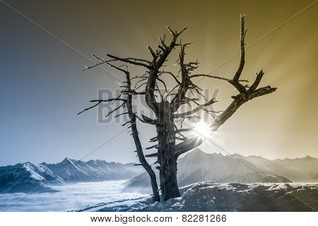 a dead tree and the rising sun