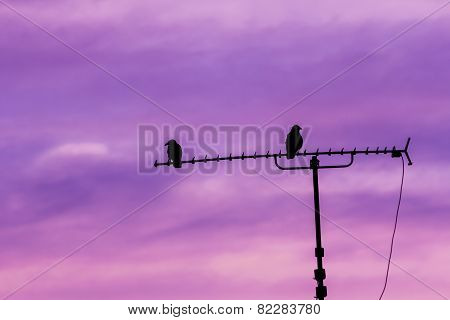 Couple of birds sitting on antenna