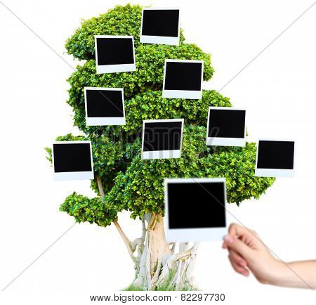Big green tree with photo cards on it isolated on white