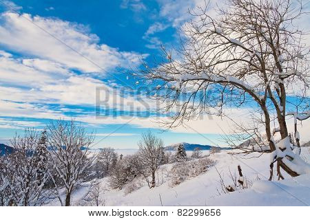 Winter  Day Christmas  Landscape