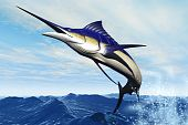 stock photo of sailfish  - A sleek blue marlin bursts from the ocean surface in a grand leap - JPG