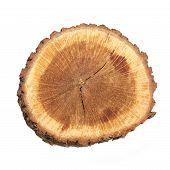 stock photo of white bark  - Wooden stump isolated on the white background - JPG
