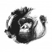picture of ape  - Ape head logo in black and white - JPG