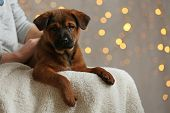 stock photo of christmas puppy  - Cute puppy on Christmas lights background - JPG