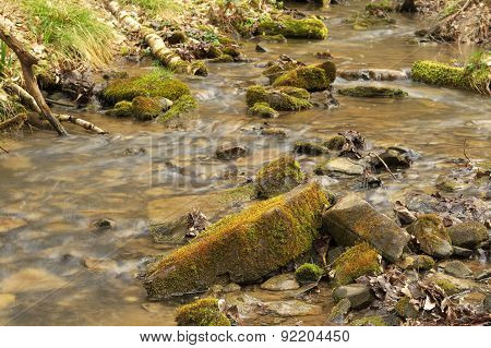 Small Stream In Old Wood